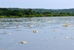 Victoria Nile, Uganda, África imagenes de archivo