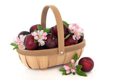 Victoria Plums Royalty Free Stock Photos