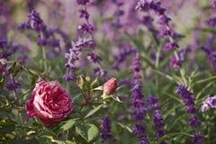 Victorian garden royalty free stock image
