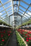 Victorian Greenhouse With Plants Royalty Free Stock Photo