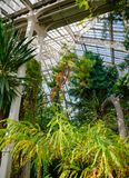 Tropical plants at Palm House greenhouse in Kew Gardens Southwes. Victorian Palm House greenhouse interior with exotic tropical trees and plants, Kew Gardens Royalty Free Stock Photo