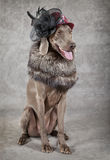 Victorian style dog Stock Photos