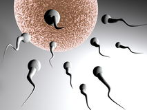 Victory. Sperm approaching pink egg. Concept of cartoon  insemination Stock Images