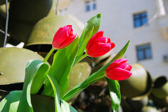 Victory day installation. Red tulips. Stock Images