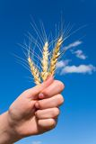 Victory for a good harvest 2 Stock Image
