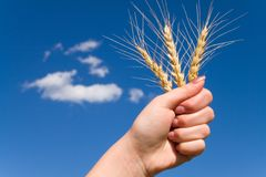 Victory for a good harvest 3. Victory for good harvest 3 stock photos