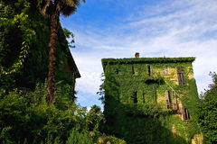 The victory of nature. Deserted house fully covered by ivy creeper Stock Photography
