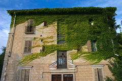 The victory of nature. Deserted house fully covered by ivy creeper Royalty Free Stock Photography