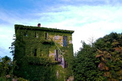 The victory of nature. Deserted house fully covered by ivy creeper Stock Images