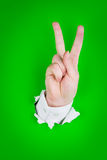 Victory sign gesture. Hand making victory sign gesture protruding through green background Royalty Free Stock Image