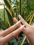 Long nail and dirty nails of the girls stock images