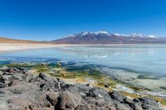Vicunjas, die auf einen gefrorenen See an der bolivianischen Ebene gehen Stockfotos