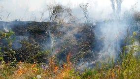 Vidéo brûlant le champ d'herbe sèche clips vidéos