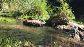 Vidéo d'angle faible d'un flowin de courant ou de ruisseau dans une forêt clips vidéos