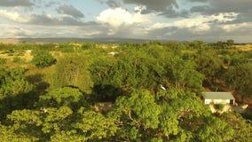 Vidéo de bourdon du Haïti d'oiseau sur l'arbre banque de vidéos