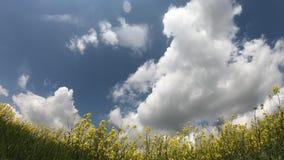 Vidéo de Timelapse des cumulus dans le domaine de colza oléagineux banque de vidéos