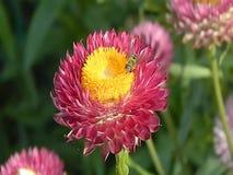 Vidéo des abeilles sur les fleurs clips vidéos