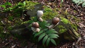 Vidéo des trois escargots sur le chanvre dans le bois Les escargots se sont cachés et sortent dehors clips vidéos
