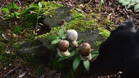 Vidéo des trois escargots sur le chanvre dans le bois Les escargots se sont cachés et sortent dehors banque de vidéos