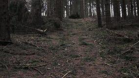 Vidéo : Forêt conifére foncée de l'Allemagne banque de vidéos