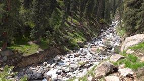 vidéo 4K de courant rapide dans la forêt Kirghizistan d'arbre de sapin de montagne banque de vidéos