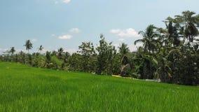 vidéo 4K volante aérienne de fond d'herbe verte et de cocotiers Île de Bali clips vidéos