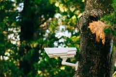 Vidéo surveillance sur l'arbre Appareil-photo caché dans la forêt FO photo stock