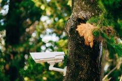 Vidéo surveillance sur l'arbre Appareil-photo caché dans la forêt FO photos stock
