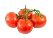 Vid de tomates maduros con descensos del agua Imagen de archivo