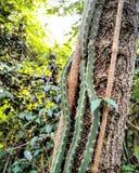 Vid del cactus Fotos de archivo