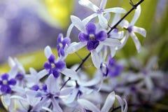 Vid del papel de lija en la floración Fotografía de archivo