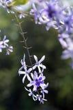 Vid del papel de lija en la floración Fotografía de archivo libre de regalías