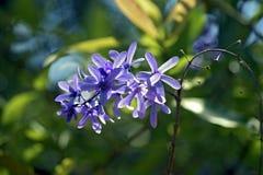 Vid del papel de lija en la floración Foto de archivo libre de regalías