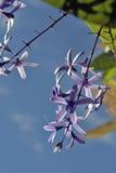 Vid del papel de lija en la floración Fotos de archivo