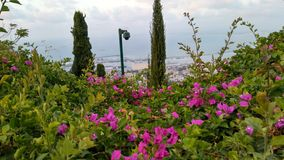 Vid den Bahim trädgården haifa, Israel Arkivfoto