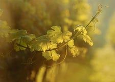 Vid en la puesta del sol Imagen de archivo libre de regalías