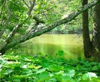 Vid floden Arkivbild