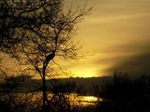 Vid floden Arkivbilder
