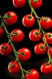 Vid fresca Cherry Tomatoes fotos de archivo libres de regalías