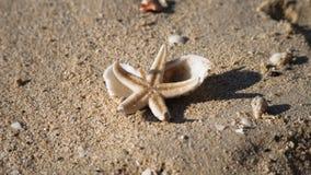Vid liv sjöstjärna på en kust stock video