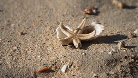 Vid liv sjöstjärna på en kust lager videofilmer