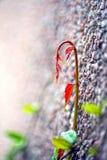 Vid roja Imagen de archivo libre de regalías
