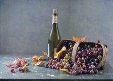 Vid y botella de vino imagen de archivo libre de regalías
