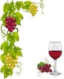 Vid y copa de vino Imagen de archivo libre de regalías