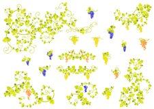 Vid y racimos de uvas estilizados. ilustración del vector