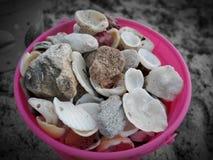 A vida ? sobre a coleta de escudos na praia fotografia de stock royalty free