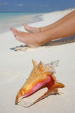 A vida é uma praia (a costa) Fotos de Stock Royalty Free