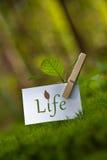 vida Foto de archivo