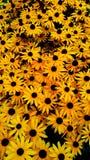 Vida amarilla Foto de archivo libre de regalías