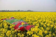 Vida amarilla Imagen de archivo libre de regalías
